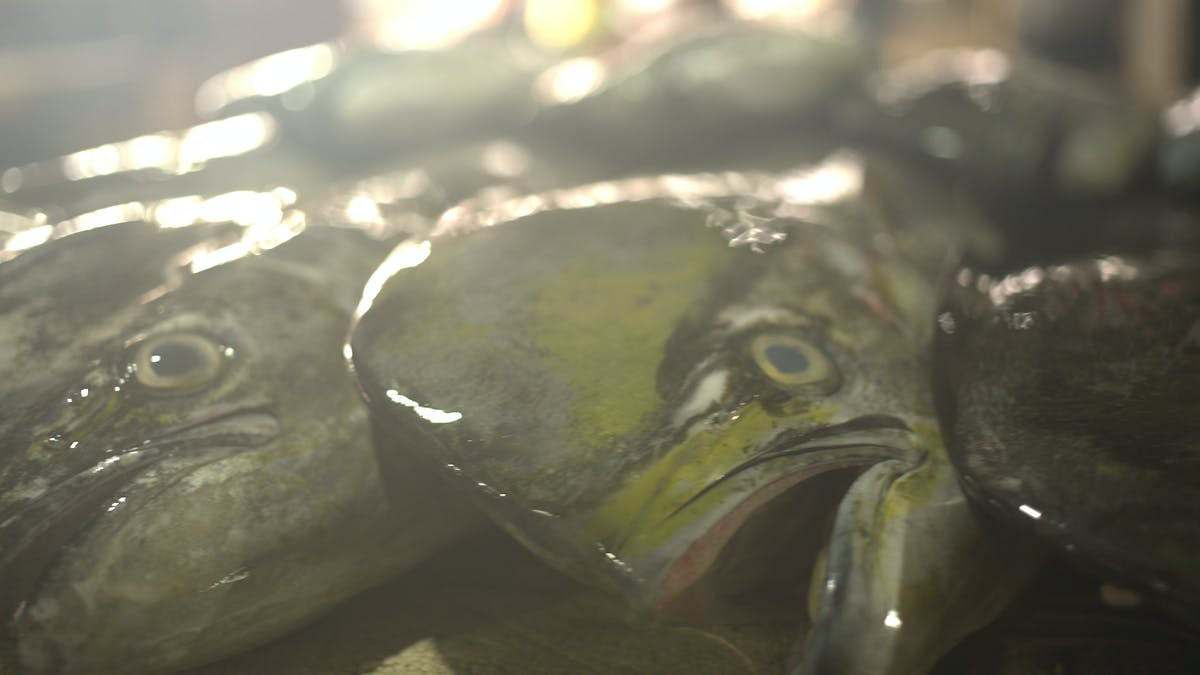 TM_TRAVEL_BALI_FISH MARKET_l_THUMBNAIL.jpg